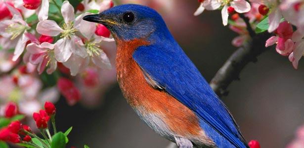 Птиците като домашни любимци
