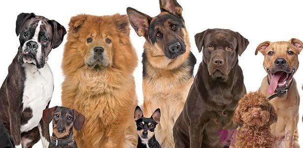 Кучетата като домашни любимци